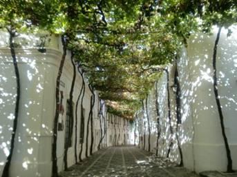 幼儿园葡萄树主题墙面